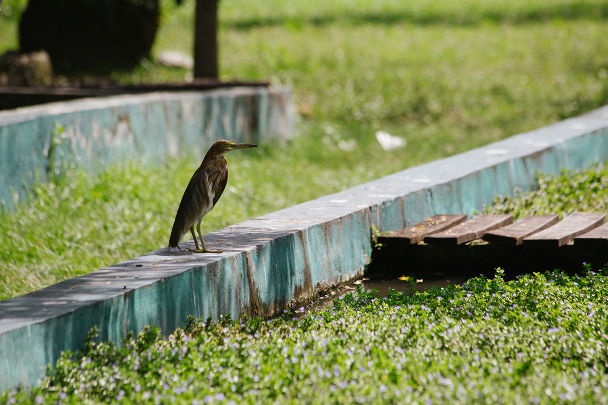 Bird in Lumpini Park