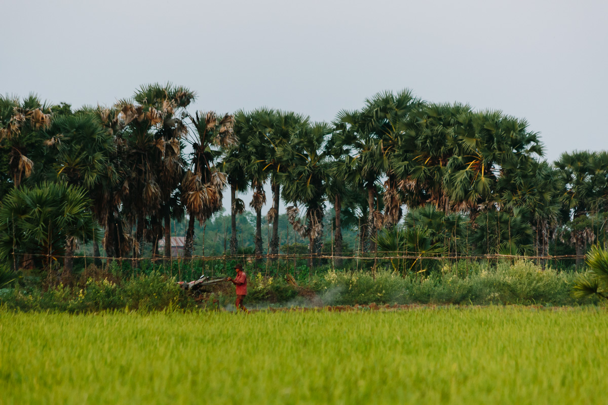 Farmer working on his rice field in Cambodia