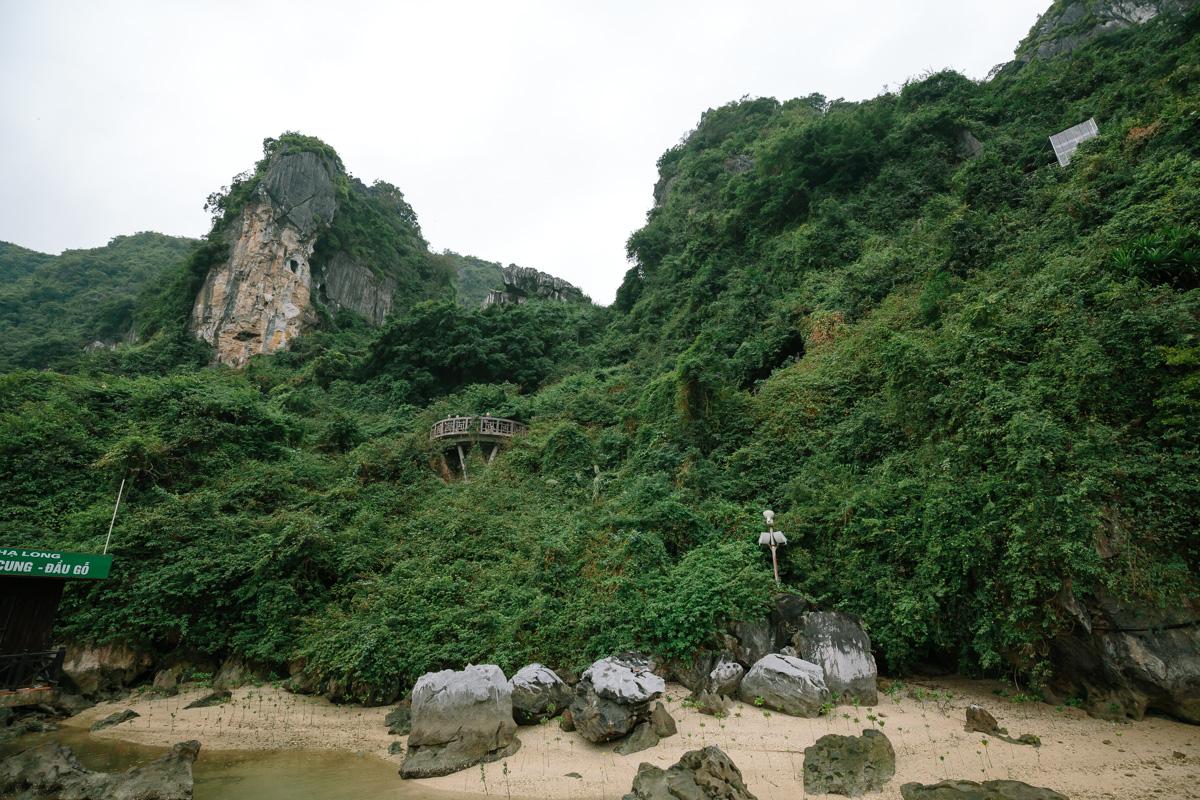 Jungle surronding the cave entrance