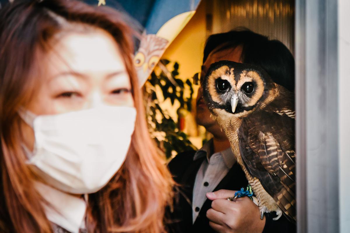 Owl cafe - Tokyo